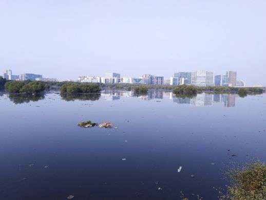 Mithi river mangroves with Mumbai's business district, BKC