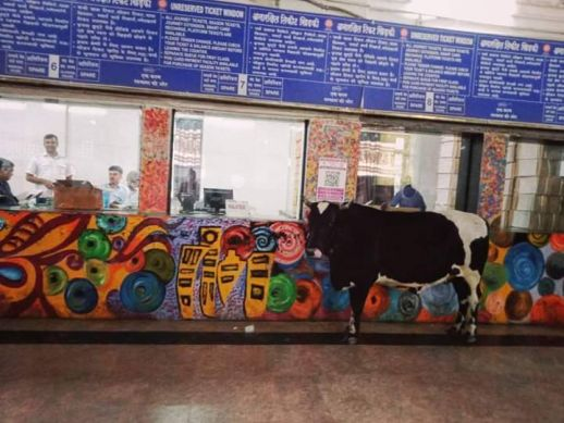A cow at the Mumbai train ticket counter